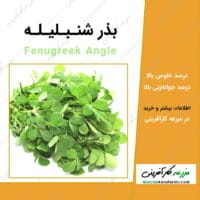 بذر شنبلیله fenugreek angle