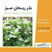 بذر ریحان سبز basil green Persian