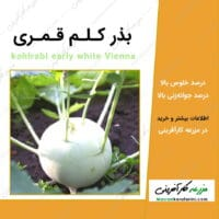 بذر کلم قمری kohlrabi early white Vienna