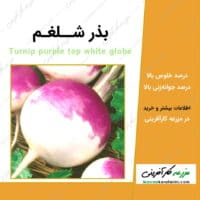 بذر شلغم Turnip purple top white globe