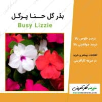 بذر گل حنا پر گل Busy Lizzie seeds